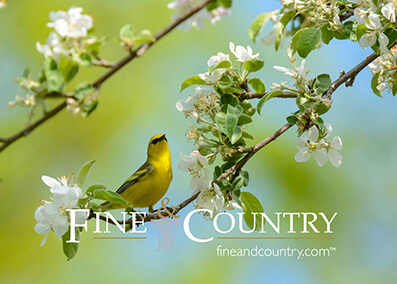 Fine and country brochures